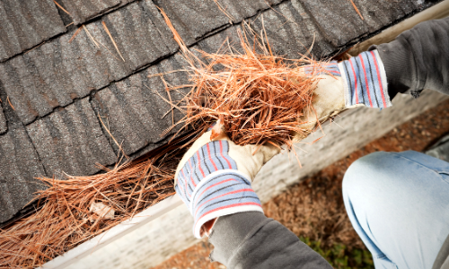 Photo of a person cleaning pine needles out of a house gutter.